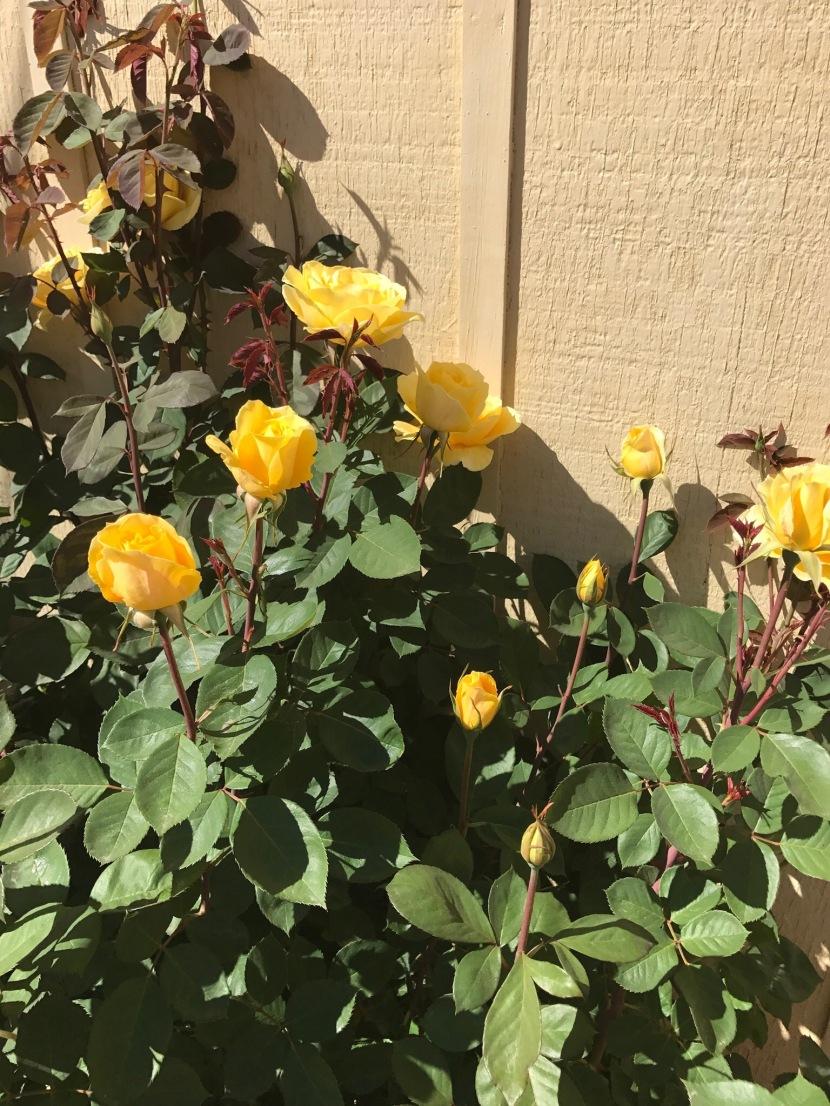 Pretty Flowers – Gratitude3/31